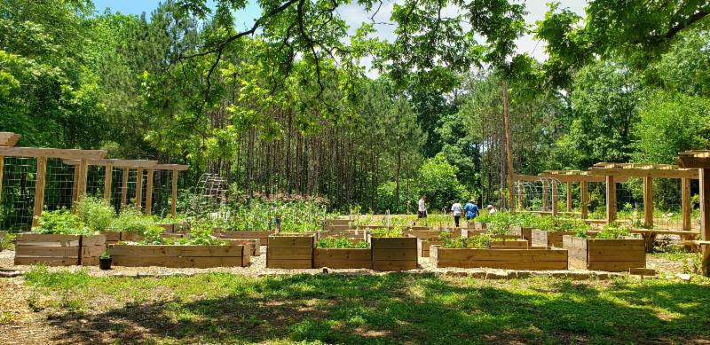 Food Forests: A Growing Urban-Conservation Connection?