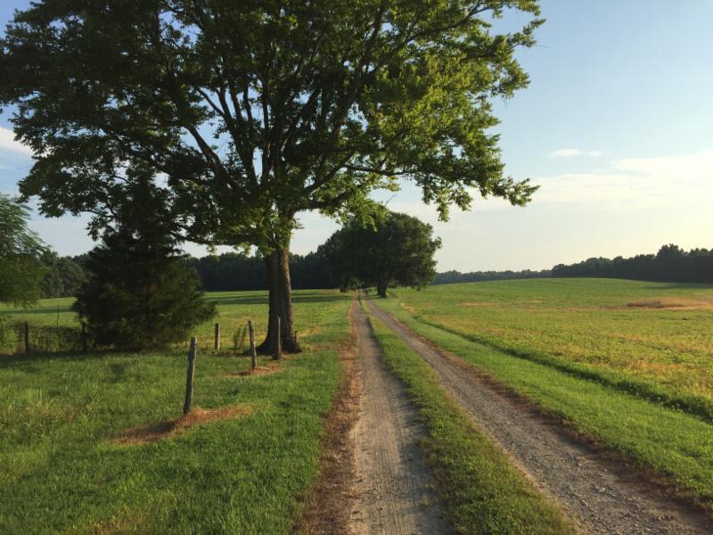 Marking Milestones – A Major New Report
