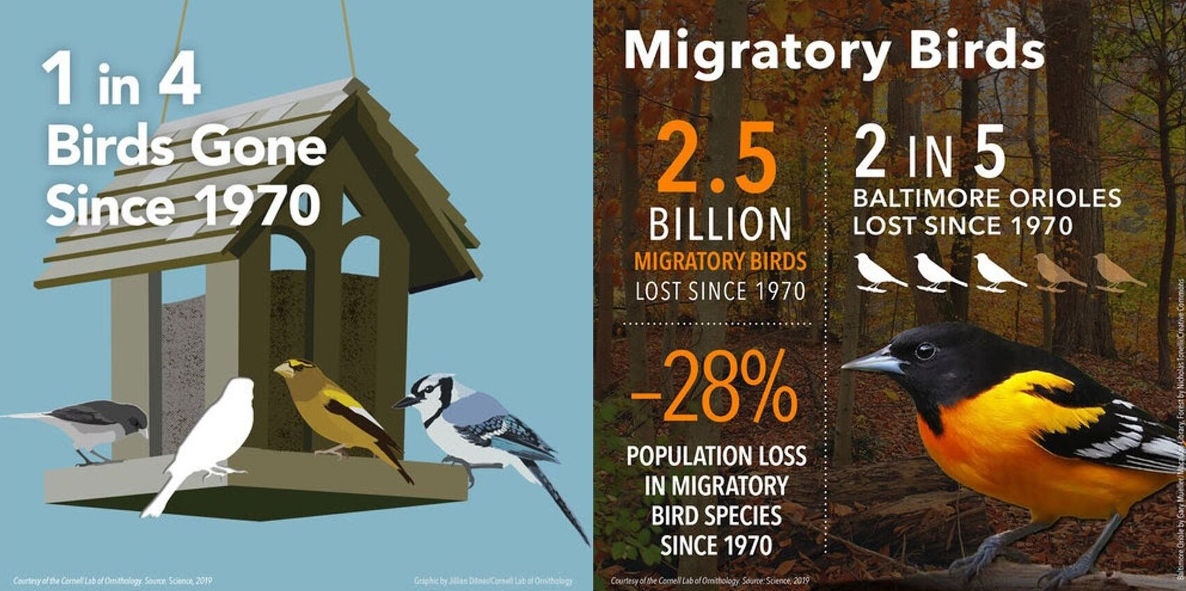 New Study Documents Staggering Loss of Birds