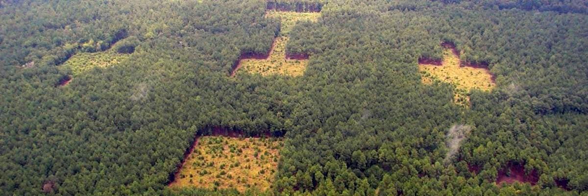 Study Confirms Habitat Connectivity is Key