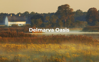 Delmarva Oasis: Protecting 50% by 2030