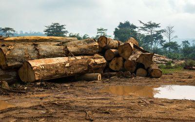 Habitat Destruction and Pandemics