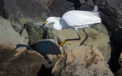 The Elegance of an Egret