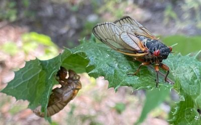 What's Bugging our Bugs?